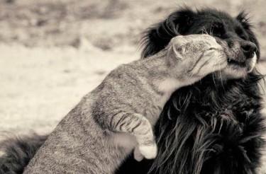 LINDAS FRASES SOBRE ANIMAIS – DIA DOS ANIMAIS