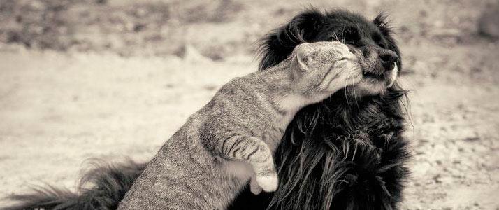 Lindas Frases Sobre Animais Dia Dos Animais