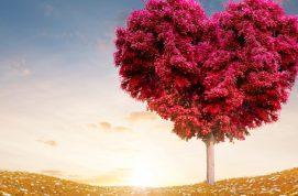 Qual a sua escolha? Que seja sempre o amor (Parábola)