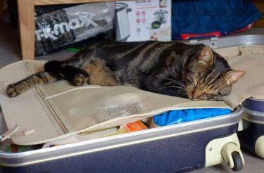 Casal descobre segredo de seu gato após a morte dele