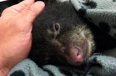 Rapaz arrisca a própria liberdade para salvar um filhote de urso