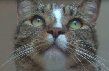 FOFURA: Essa gatinha resgatada é provavelmente a gata mais talentosa do mundo! (vídeo)