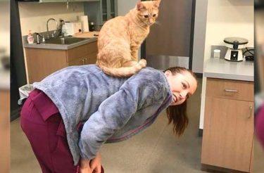 Gato que vive em clínica veterinária acalma todos os pacientes &#8211; até mesmo cães! <3