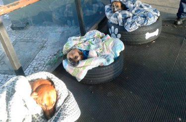 Mulher improvisa camas para proteger cãezinhos de rua do frio