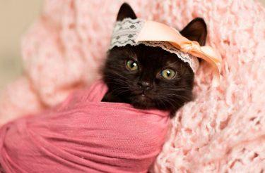 Para derreter o seu coração: fotógrafa divulga fotos encantadoras de gatinha recém-nascida e conquista a internet
