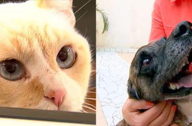 Conheça o gatinho ESTUDANTE e o cão TRABALHADOR! [vídeo]