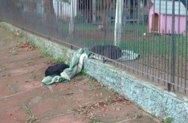 Cachorrinha DIVIDE seu cobertor com cachorro de rua!