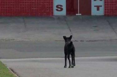 Quase dois anos depois, cãozinho continua 'esperando' por dono que morreu em hospital :(