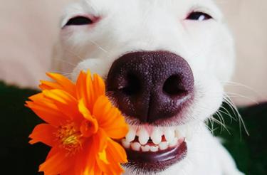 Impossível não sorrir: Conheça Euro, o cãozinho sorridente que conquistou a internet!
