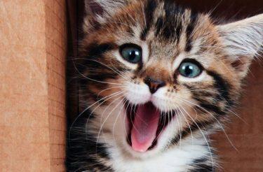 Você sabe o que seu gato está te dizendo com os pequenos gestos do dia a dia? Entenda!