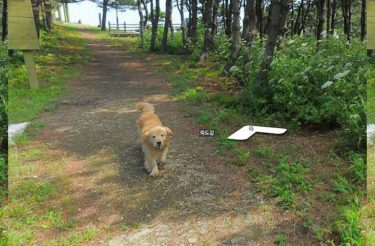 Este cachorro seguiu o carro do Google e saiu em todas as fotos do seu bairro no Street View, veja as fotos dessa fofurice!