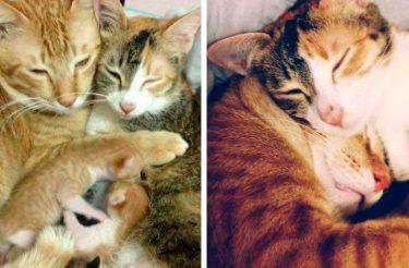 Papai gato apoia a parceira enquanto ela dá a luz e conquista o coração do mundo