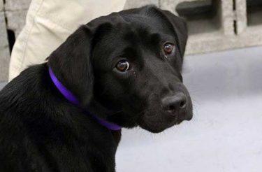 Cachorrinha Lulu é demitida da CIA por falta de interesse no trabalho