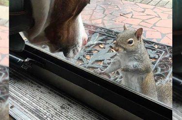 Esquilo bate na janela de família todos os dias. 8 anos depois eles percebem o que ele queria dizer