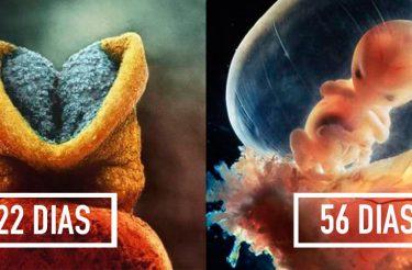 Esta série de fotos mostra como nasce uma criança!