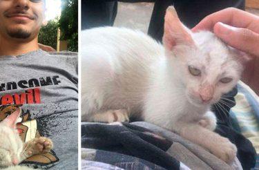Homem acorda de uma soneca com gatinha de rua dormindo em sua barriga e decide adotar