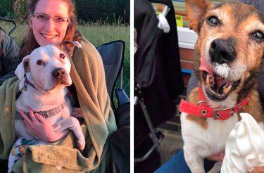 Mulher cuida dos últimos Dias de vida de Cães doentes terminais abandonados