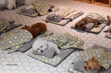 Fotos de cachorros dormindo em uma creche viralizaram no mundo todo (23 fotos)