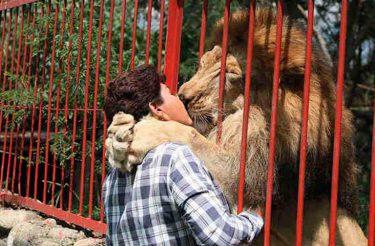 Depois de 20 anos juntos, este leão em estado terminal se despede de sua tratadora