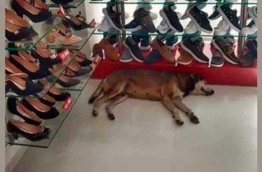 Cliente reclama ao ver Cão de rua em loja, mas dono se recusa a tirar o cão de lá