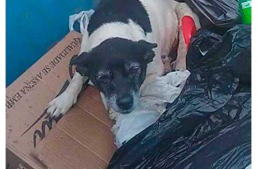 Homem salva cão com tumor que foi jogado fora em lixeira como lixo