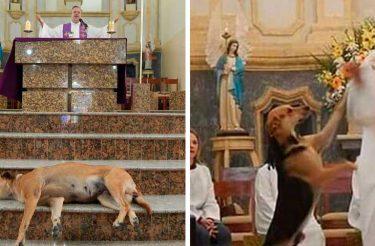 Padre gentil leva cães de rua à missa para encontrar novas famílias