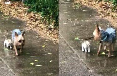 VÍDEO: Cachorrinho resgata gatinho abandonado na chuva e o leva para casa