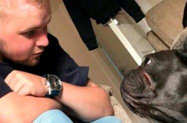 Partiram juntos, cachorro morre 15 minutos depois de seu humano