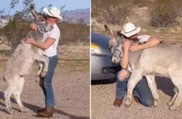Burro adotado age como um cachorro quando vê que seus amigos humanos em casa