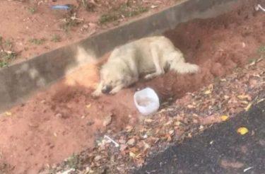Cachorro espera há 8 dias pela dona fora do hospital sem saber que ela havia falecido