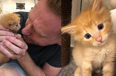 Filhote fraquinho abandonado com dois dias de vida cresce e se torna o gato mais lindo