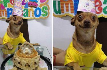 Cachorrinho está tão feliz porque se lembraram de seu aniversário [Vídeo]