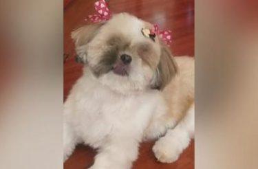 Cadelinha que perdeu os olhinhos devido a maus-tratos é resgatada e ganha mamãe amorosa