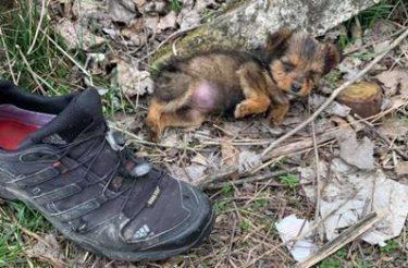 Rapaz encontra cachorrinha faminta morando em sapato e dá a ela uma vida totalmente nova