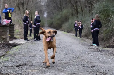 """Cachorro corre meia maratona """" por engano"""" e termina em 7º lugar [Vídeo]"""