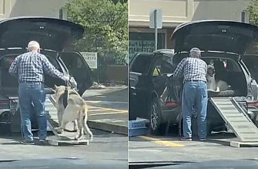 Homem constrói rampa para ajudar seu cachorro idoso a subir no carro [Vídeo]
