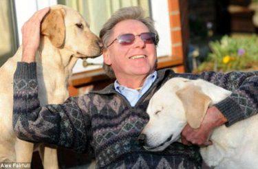 Cão-guia perde a visão e passa a ser guiado com seu dono por outro cão