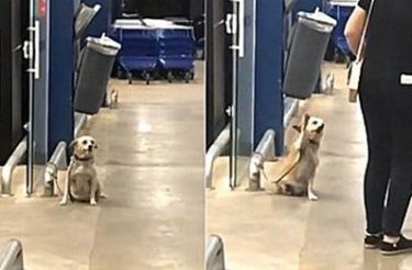 Cachorro é visto cumprimentando pessoas em frente de supermercado [Vídeo]